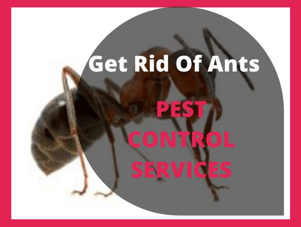 Ants Control pakenham