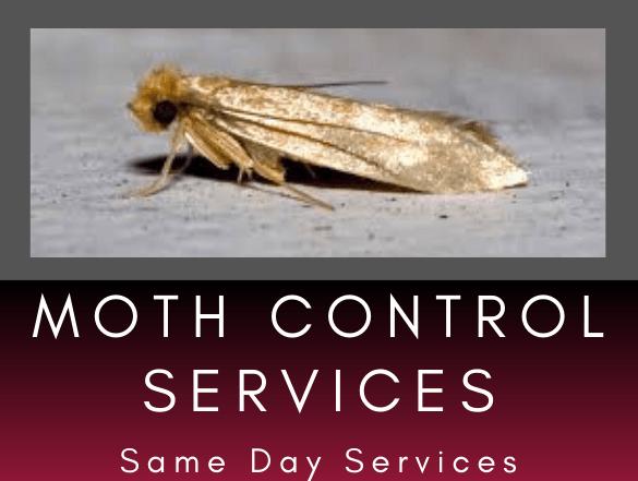 pest Control services-1