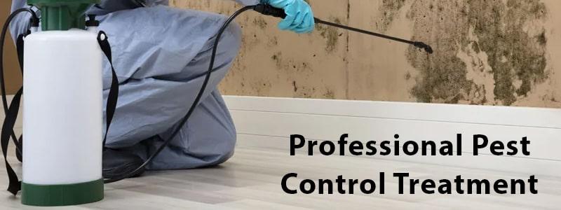 Professional Pest Control Treatment