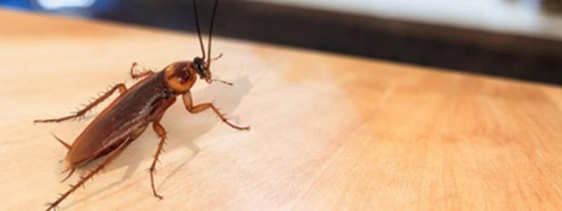 Avail Pest Control Services